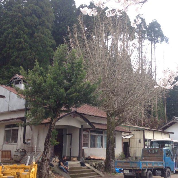 建物外観。すぐ前に大銀杏の木。