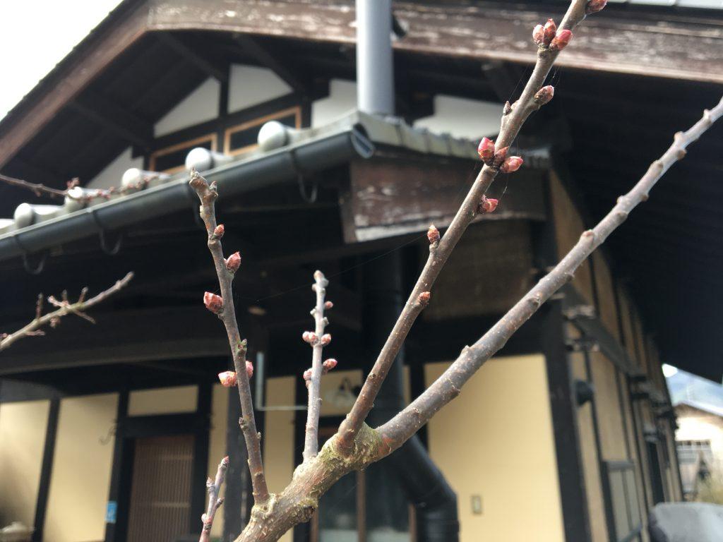 城山製麺は4月から営業開始いたします。